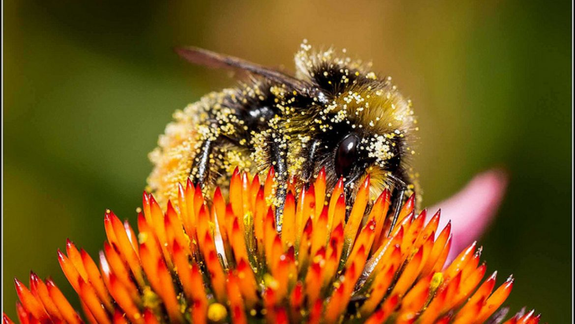 How to Choose the Best Bee Pollen Weight Loss